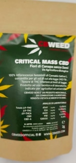 CBWeed Blueberry Critical mass